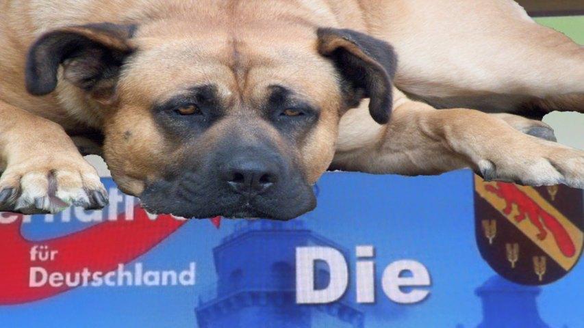 Die seltsame Wende der Hundekotbeseitigung in Reinickendorf